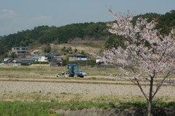 Kakegawa_shomotaruki02