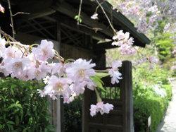 Kamakura_myougetuin005