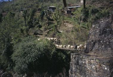Nepal005_1