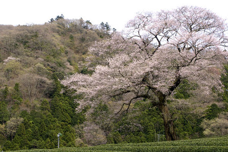 Spring_01_april_002_1