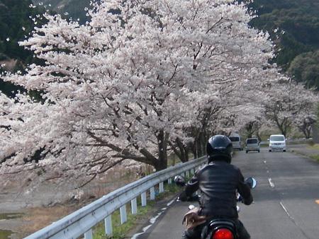 Spring_01_april_009