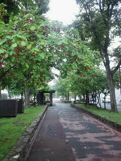 旭川、朝の散歩道